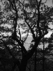 Tree view bw