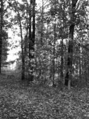 Trees bw 2