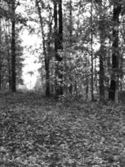 Trees bw