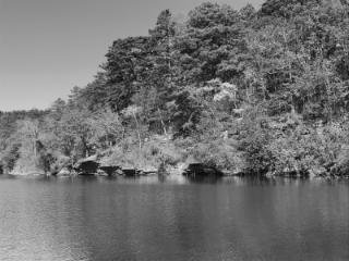 Trees River bw 1